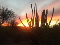 Organ Pipe Cactus National Monument, near Ajo, AZ