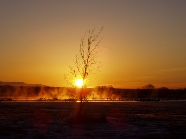 Fire on ice phenomenon, Bosque del Apache, New Mexico