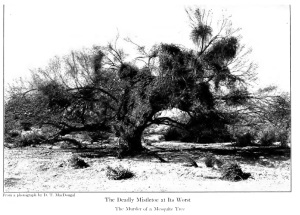 From the 1908 book, Camp-fires on Desert and Lava by William Temple Hornaday.